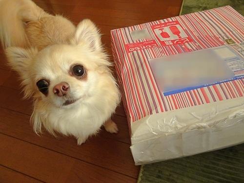 リアン父さんからプレゼント♪ 柚子