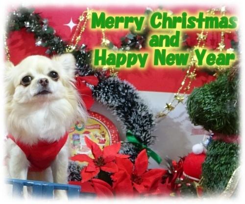 柚子 クリスマスカード