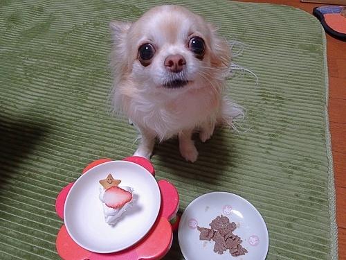 柚子 お誕生日のウマウマです♪