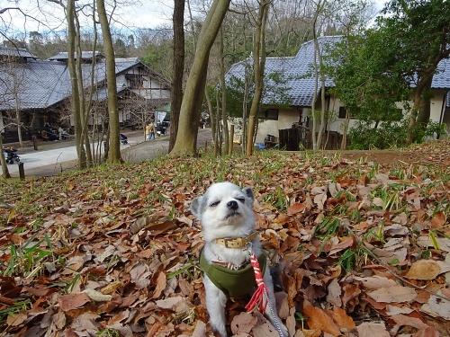 犬祭り ぎふ清流里山公園 ぴぃ助くん