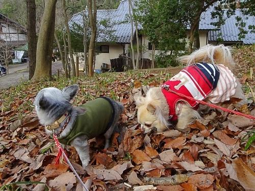 犬祭り ぎふ清流里山公園 ぴぃ助くん 柚子
