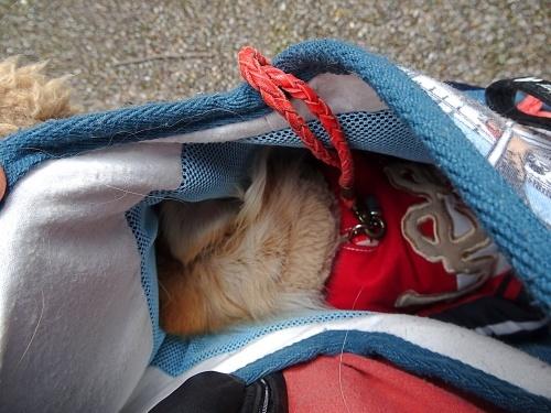 犬祭り ぎふ清流里山公園 柚子