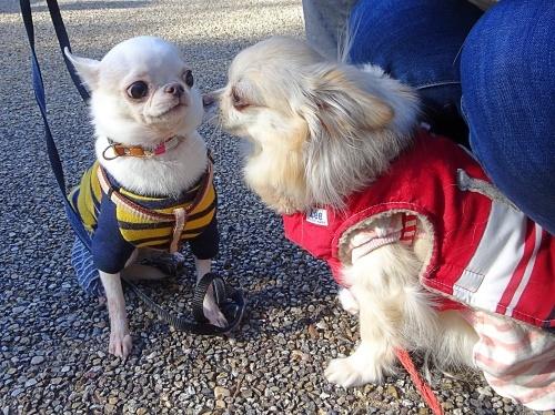 犬祭り ぎふ清流里山公園 おぉちゃん 柚子