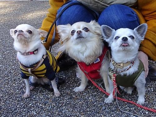 犬祭り ぎふ清流里山公園 おぉちゃん ぴぃ助くん 柚子