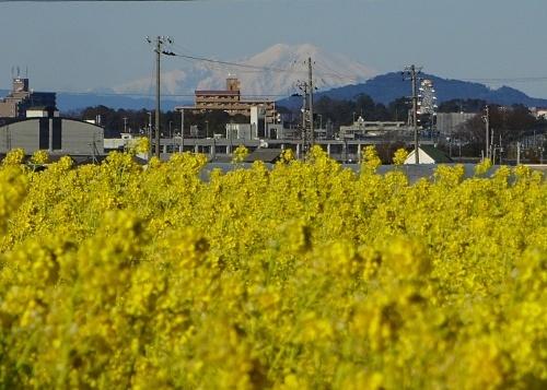 菜の花畑と御嶽山