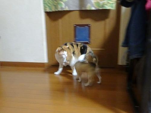 あられ&杏子