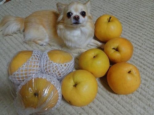 柚子&新高