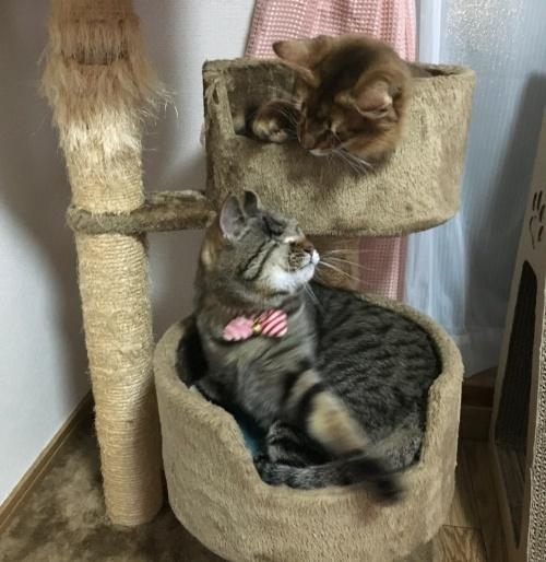 リンちゃん&麦くん