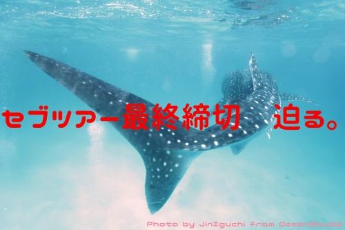 _MG_7756cp.jpg