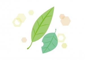 plant24.jpg