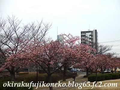 0220井沼方桜1