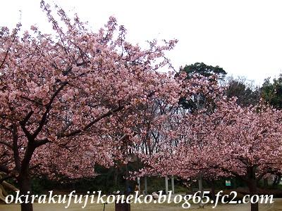 0220井沼方桜2