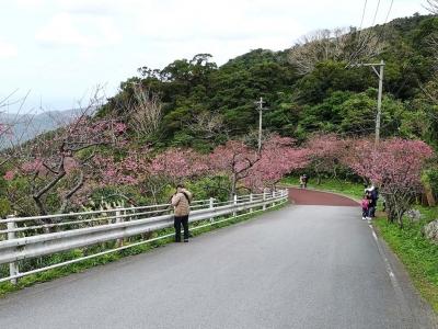 20200119SAKURAMATURI_sakura1.jpg