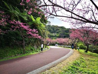 20200119SAKURAMATURI_sakura3.jpg