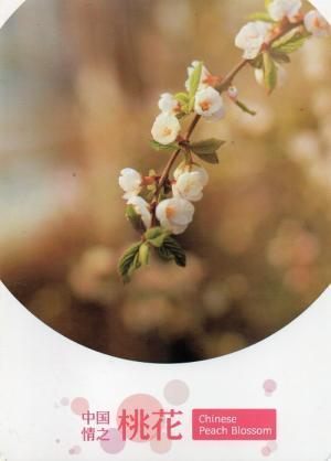 桃の花  中国