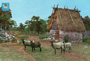 羊  スウェーデン