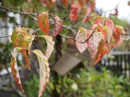 my-garden 059 (3)