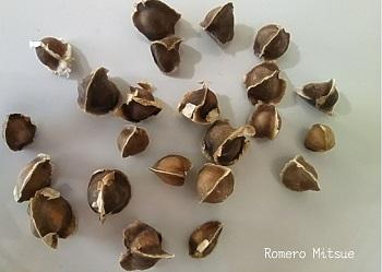 semilla de moringa 350