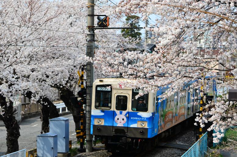 4/2 桜と上信電車