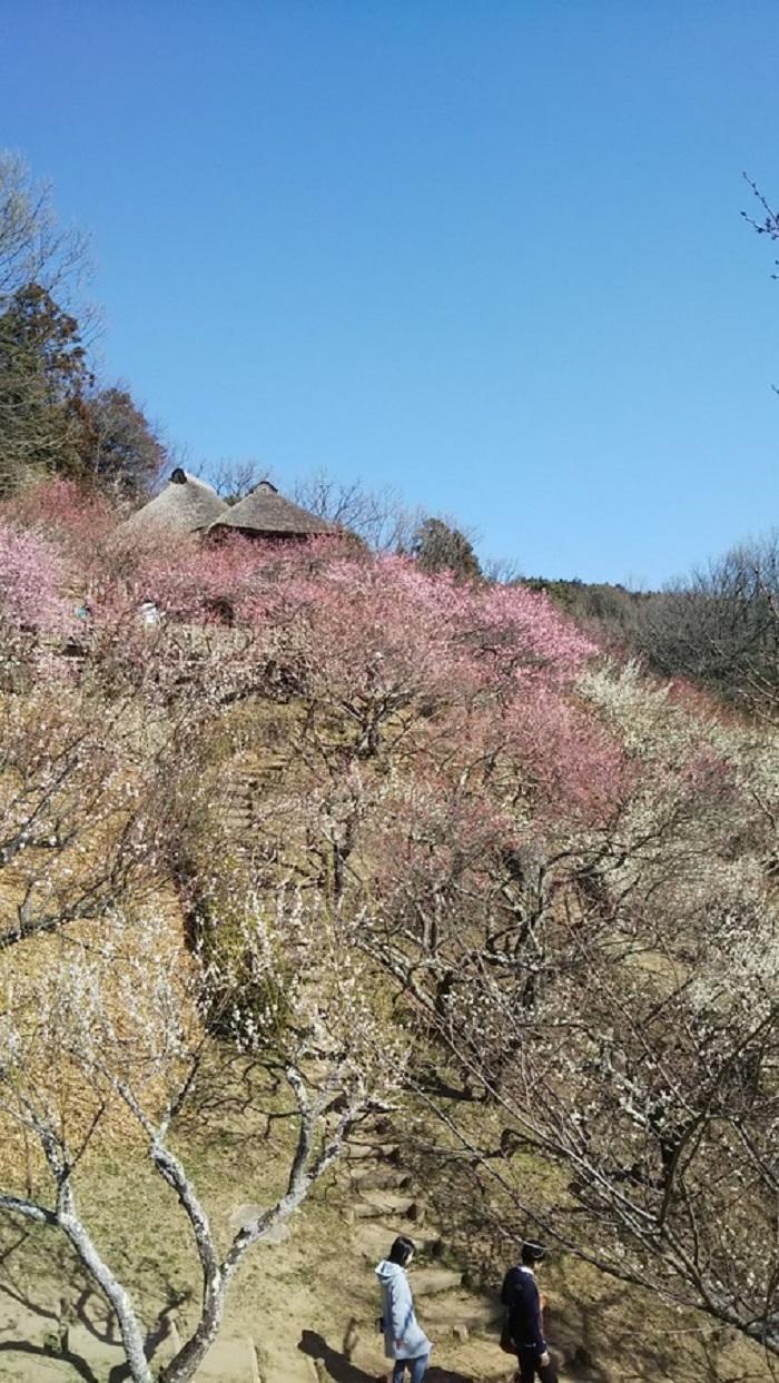 筑波山と牛久大仏8