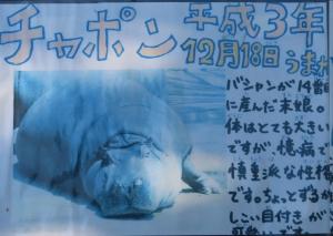 かみ動後11-1