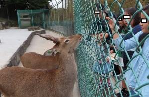 岡動物2019-6