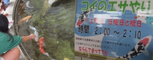 ぎょ2019-19