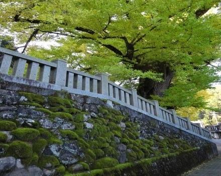 001吉田神社黄葉