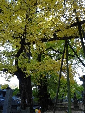 002吉田神社黄葉