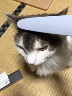 猫じゃすり2