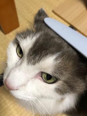 猫じゃすり1