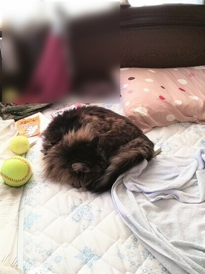 ベッドにキタ~