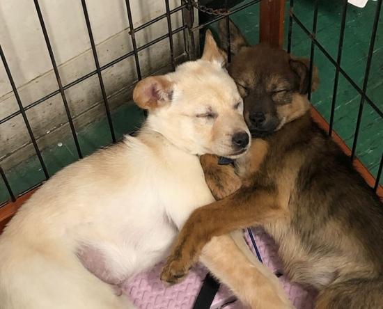 おおさかワンニャンセンターの野犬の子犬たち