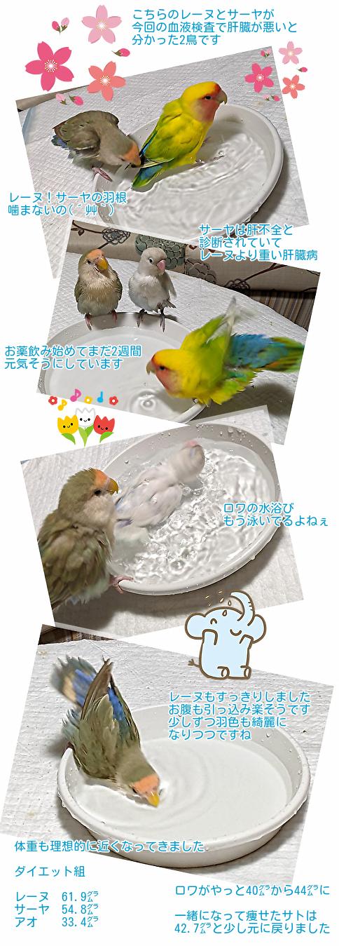 5鳥の近況