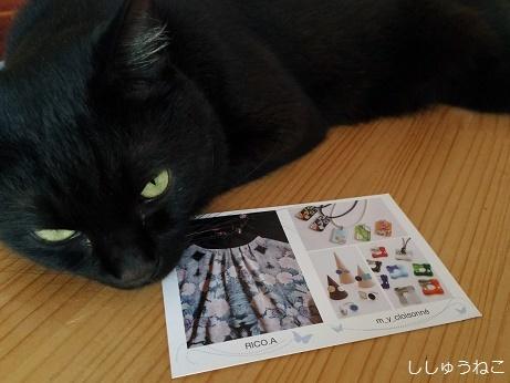 minakoさんDMと猫