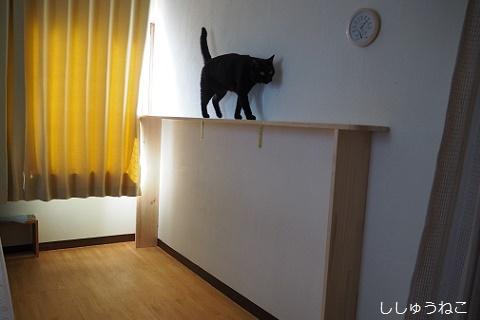 Jkと猫棚2