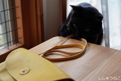 Jkと黄色い財布バッグ 4