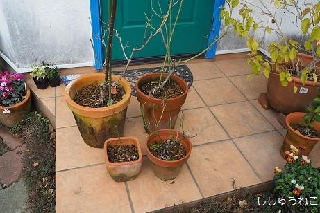 バラ小さい鉢4個