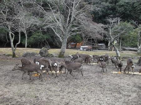 R大元公園12-29