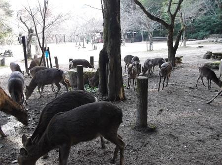もみじ谷2-1