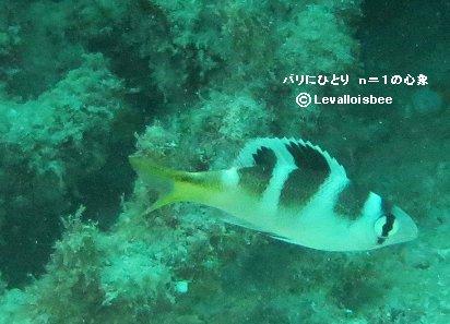名前の分からない魚REVdownsizw