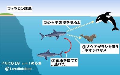 シャチを見たサメは猟場を捨てる