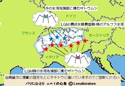 LGM最前線を示すザトウムシREV