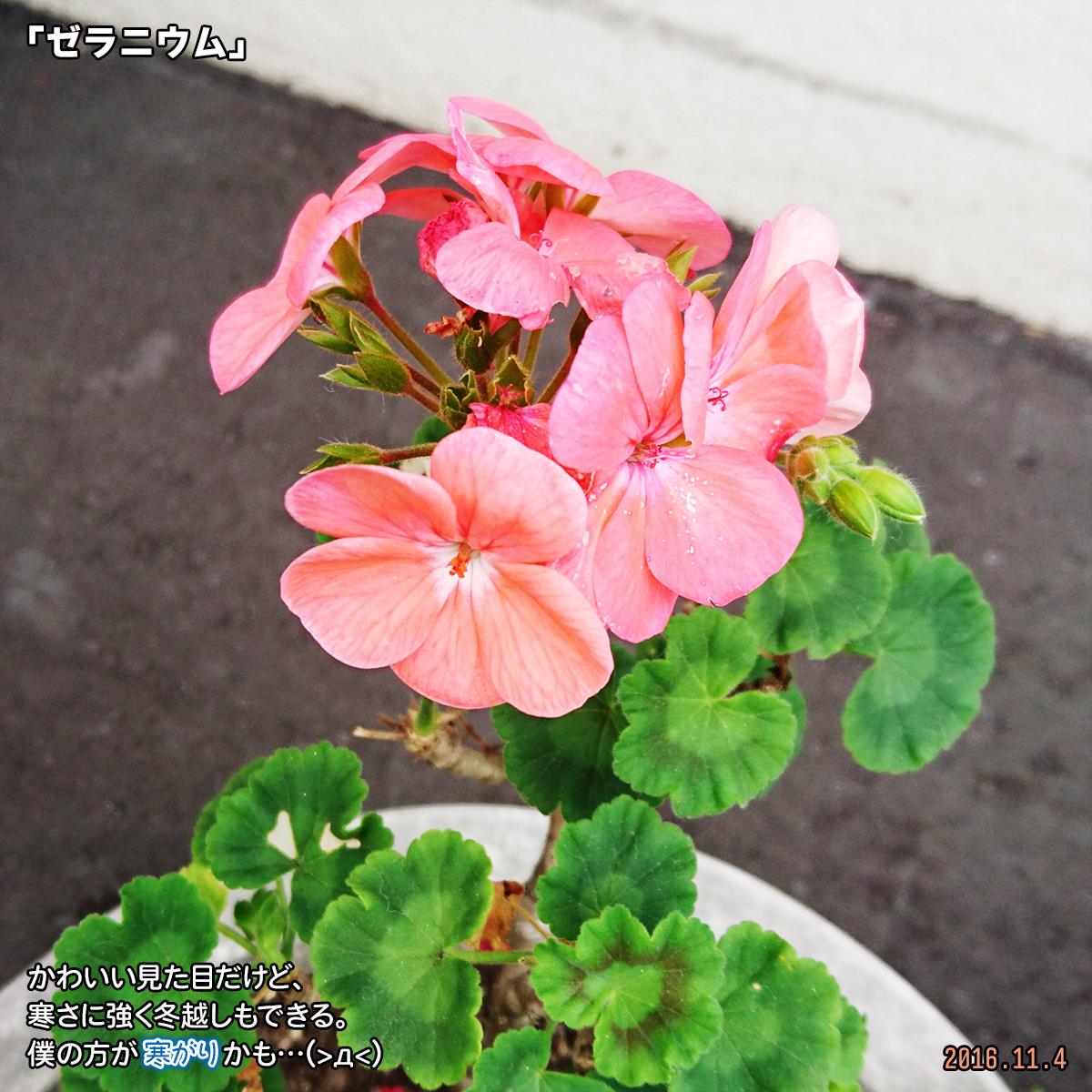 DSC_0391_1.jpg