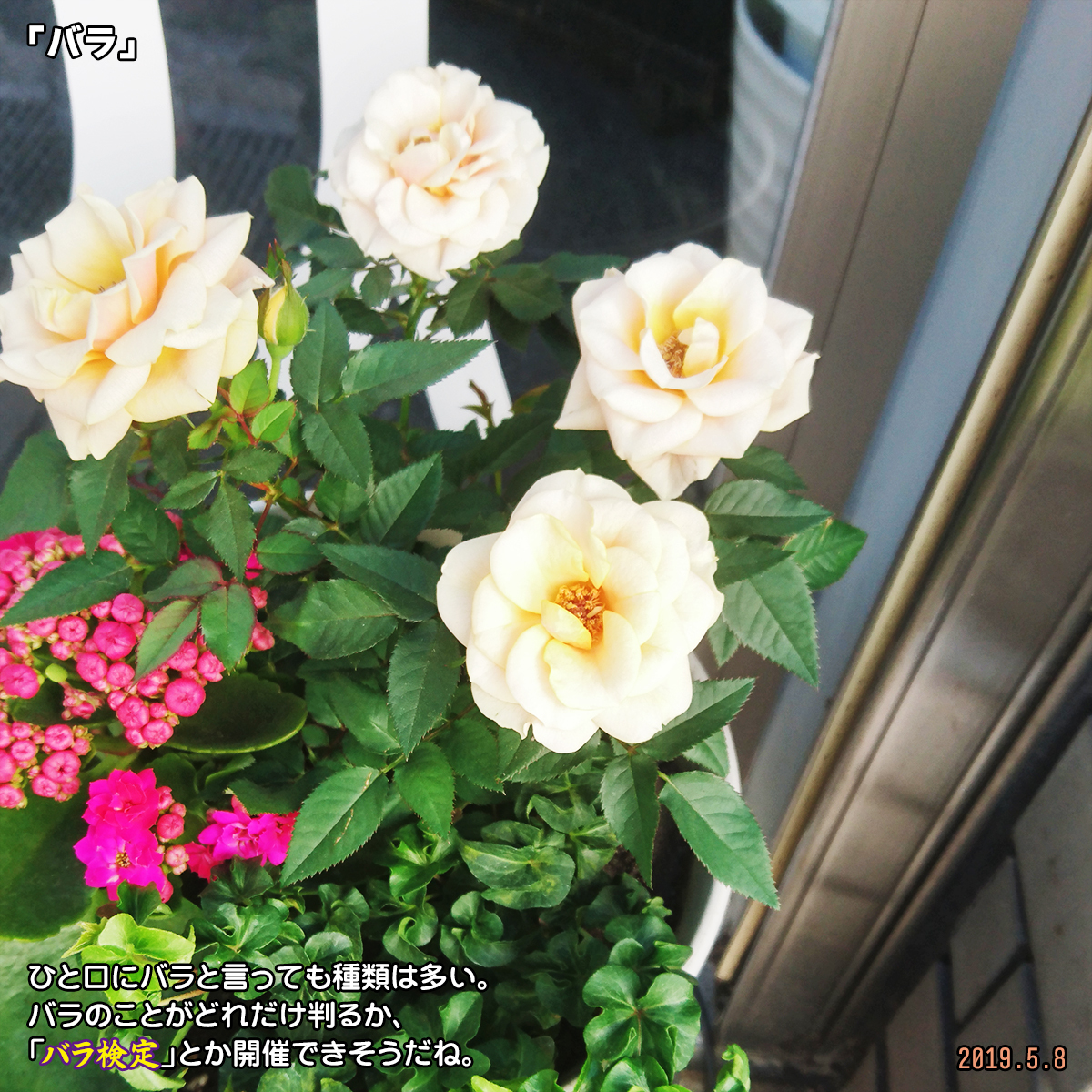 DSC_0543_2019101415473018f.jpg