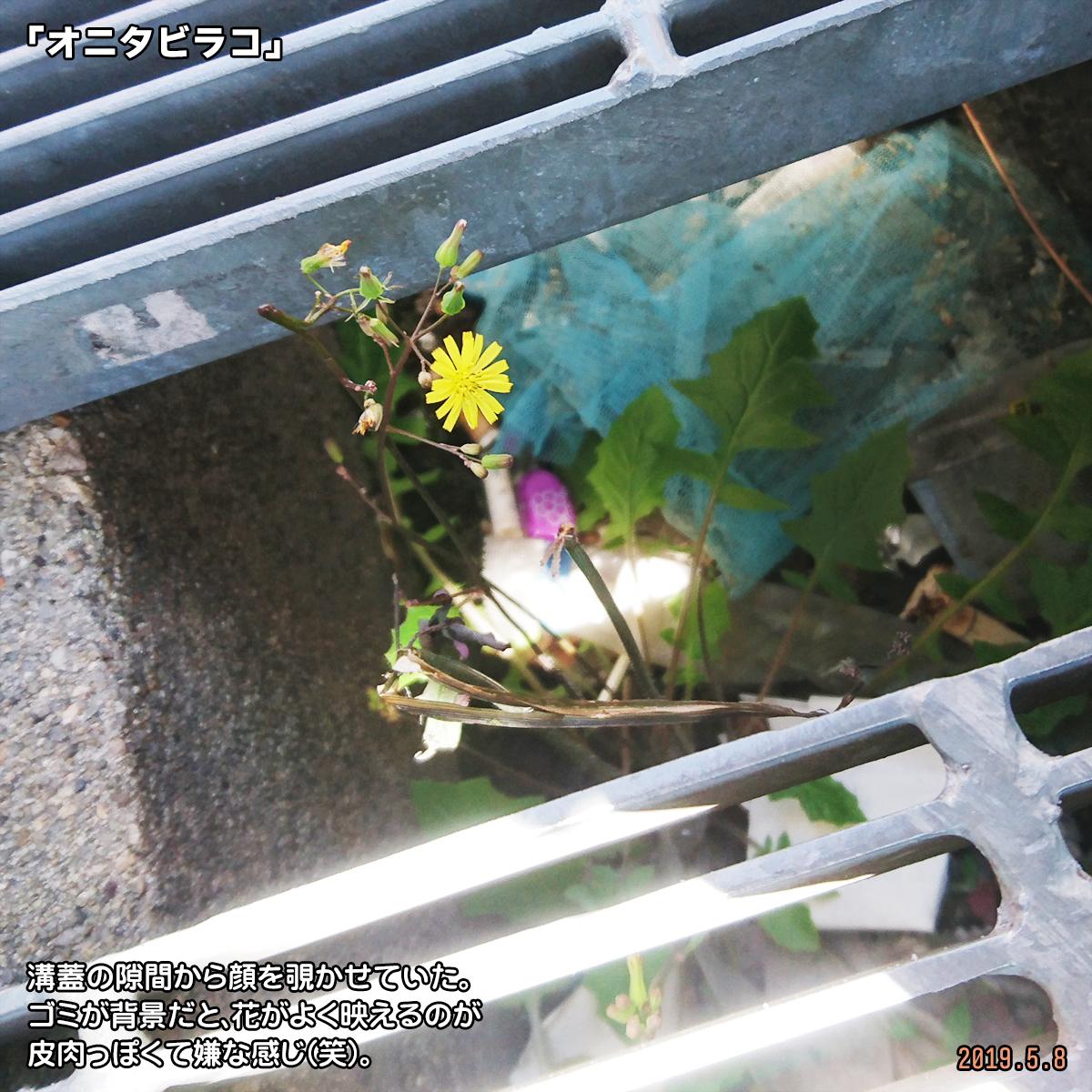 DSC_0544-(1).jpg