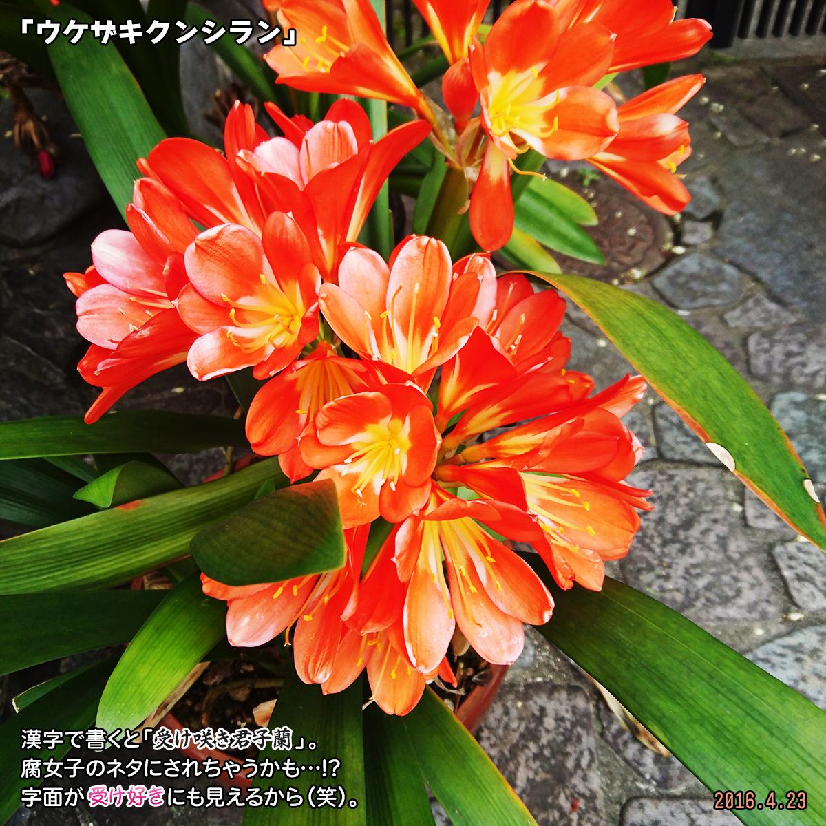 DSC_0544_20191212172610f8a.jpg
