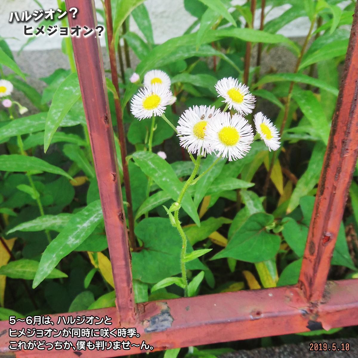 DSC_0567.jpg