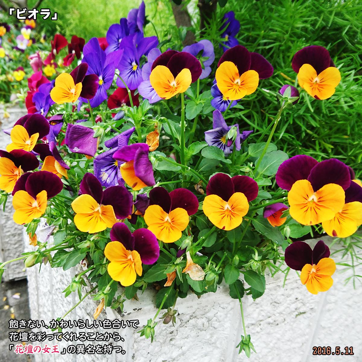 DSC_0682_201912181343391a1.jpg