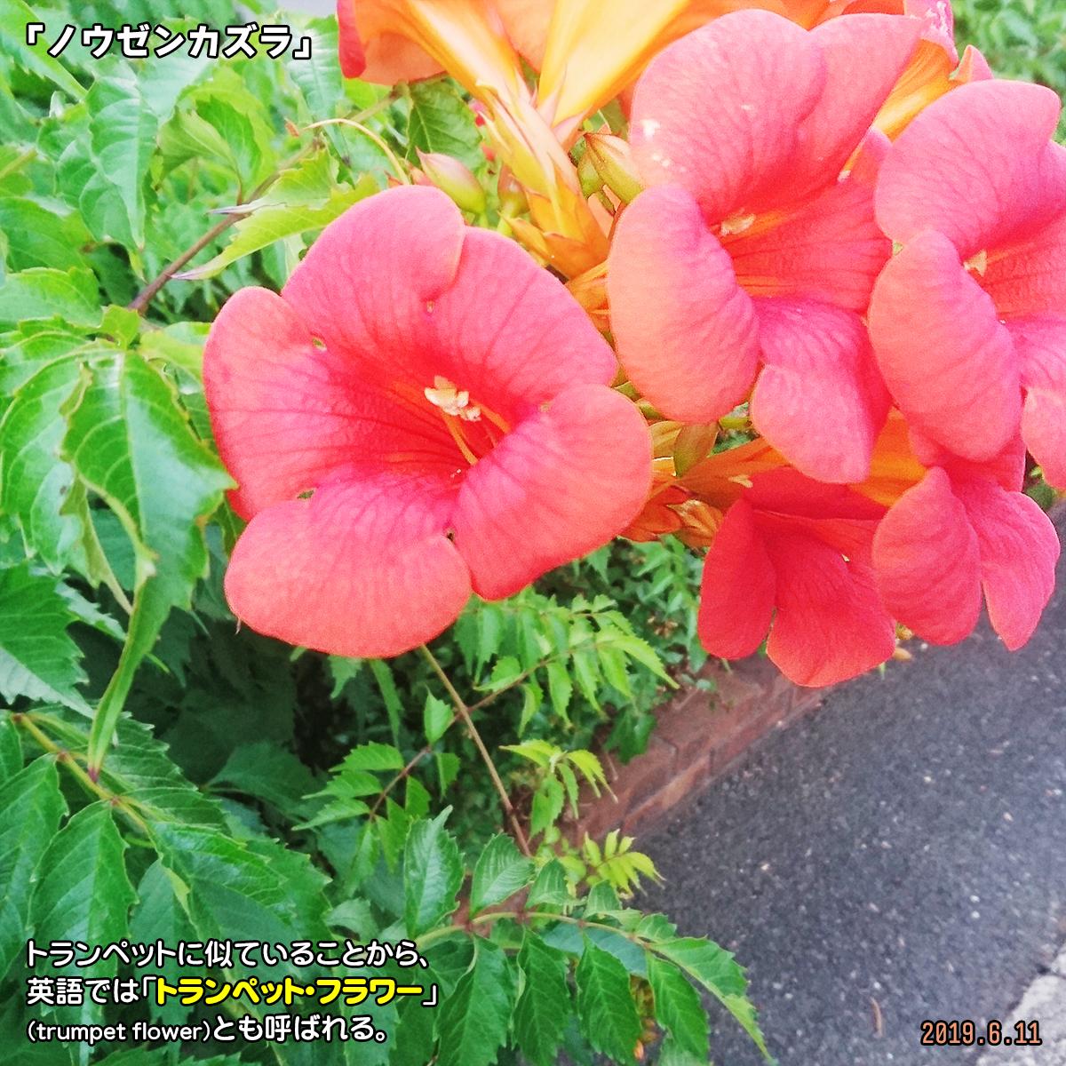 DSC_0775_20190907215719e0c.jpg